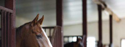 Equine 400x150 - Horse Management