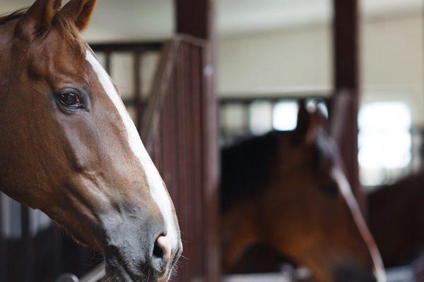 horse 600x400 - Horse Management