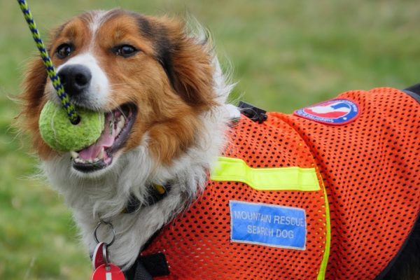 Mountain Rescue & Search Dogs