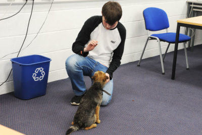 DSC 8727 400x267 - Mabel the Border Terrier Helps Animal Students