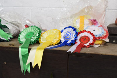 WEBHORSE2 400x267 - Inter-College Equitation and Show Jumping Competition