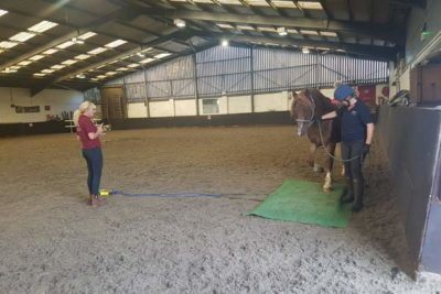 WEB george 400x267 - College Horses Given Important Assessments and Nutritional Plans
