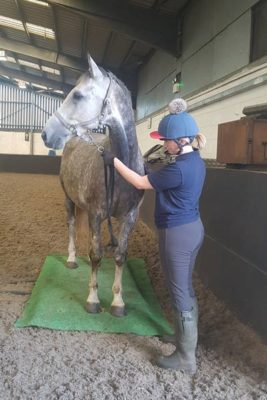 WEB paddy 267x400 - College Horses Given Important Assessments and Nutritional Plans