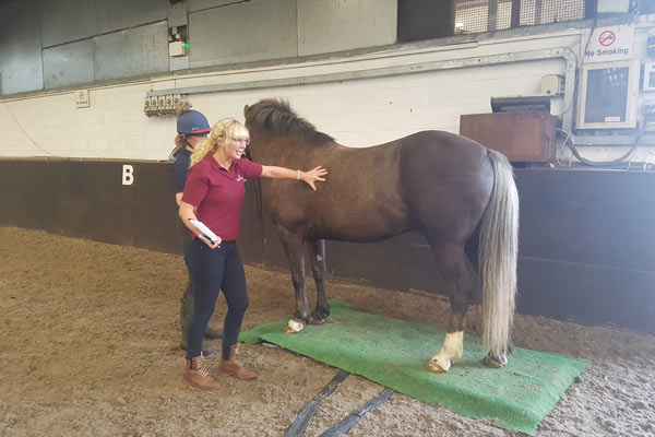 WEB sarah - College Horses Given Important Assessments and Nutritional Plans