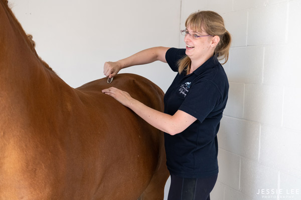 College Horses Enjoy Physiotherapy Session