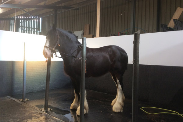 Equine Rehabilitation Visit At Crow Wood Equestrian