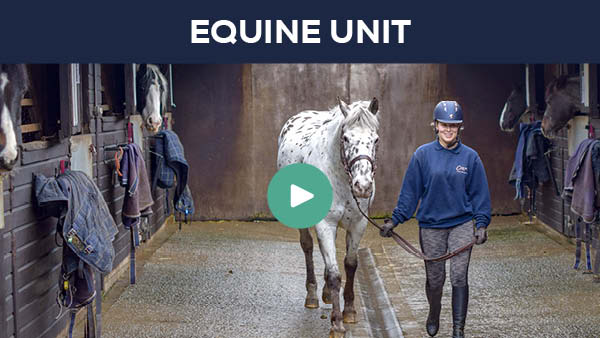 Equine Yard Virtual Tour