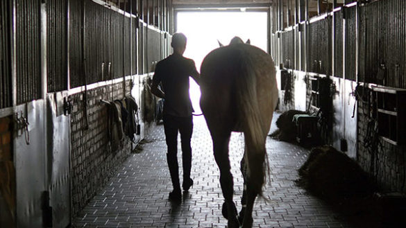Equine Student Excels on Work Placement -